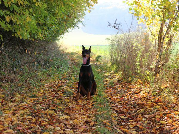Isis, chien heureux.