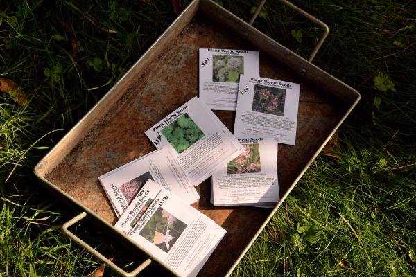 Vous cherchez des graines de vivaces ? Connaissez-vous Plant World Seeds ?