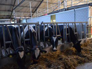Nescio Farm, (Pays-bas en camping-car)
