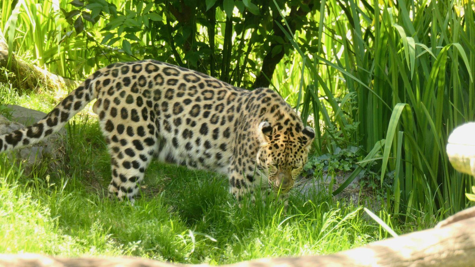 Perroquets,  Panthère, Suricate, Potamochère roux, Flamant de Cuba, Tapir, loup à crinière, lion, manchot du Cap, Girafe......plus de 450 animaux un superbe zoo