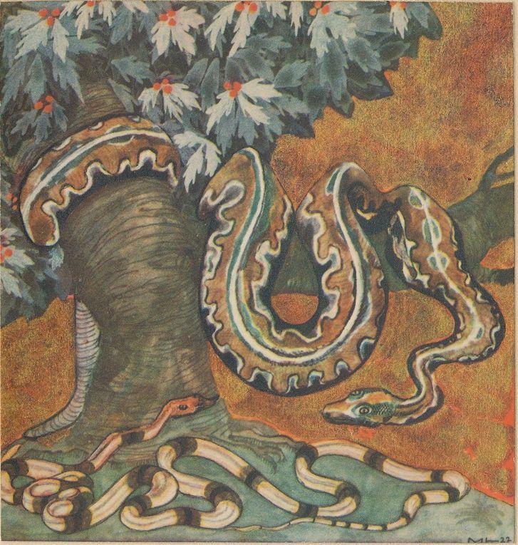 Illustrations 1924 Müller&Co