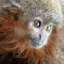 Descubren en la Amazonia más de 400 nuevas especies durante los últimos cuatro años