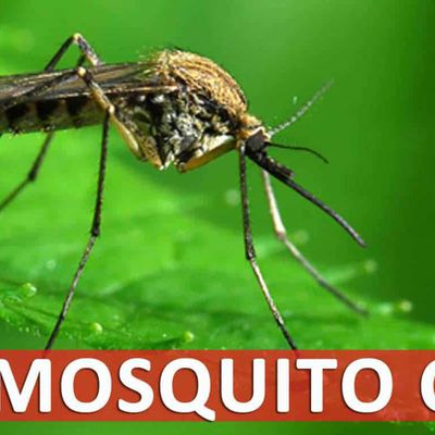 Know How Pest Control Rodent Treatment can Save your Health