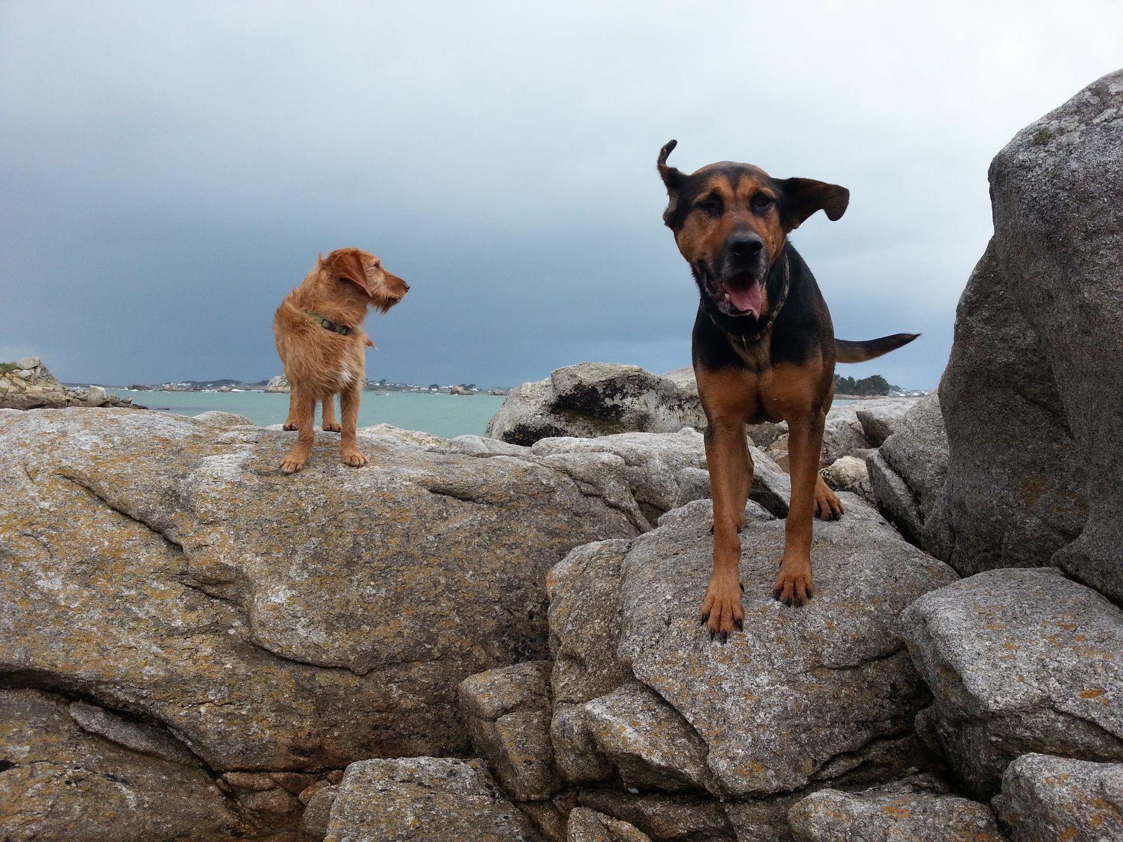 De nombreux endroits accessibles aux chiens (certaines restrictions en juillet et août)