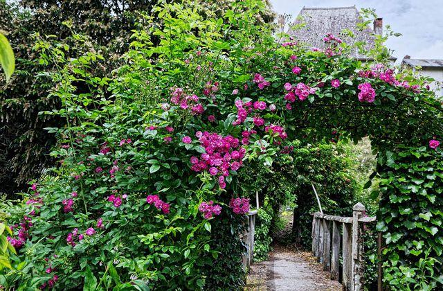 Le Jardin de Liliane Juin 2018 - 3