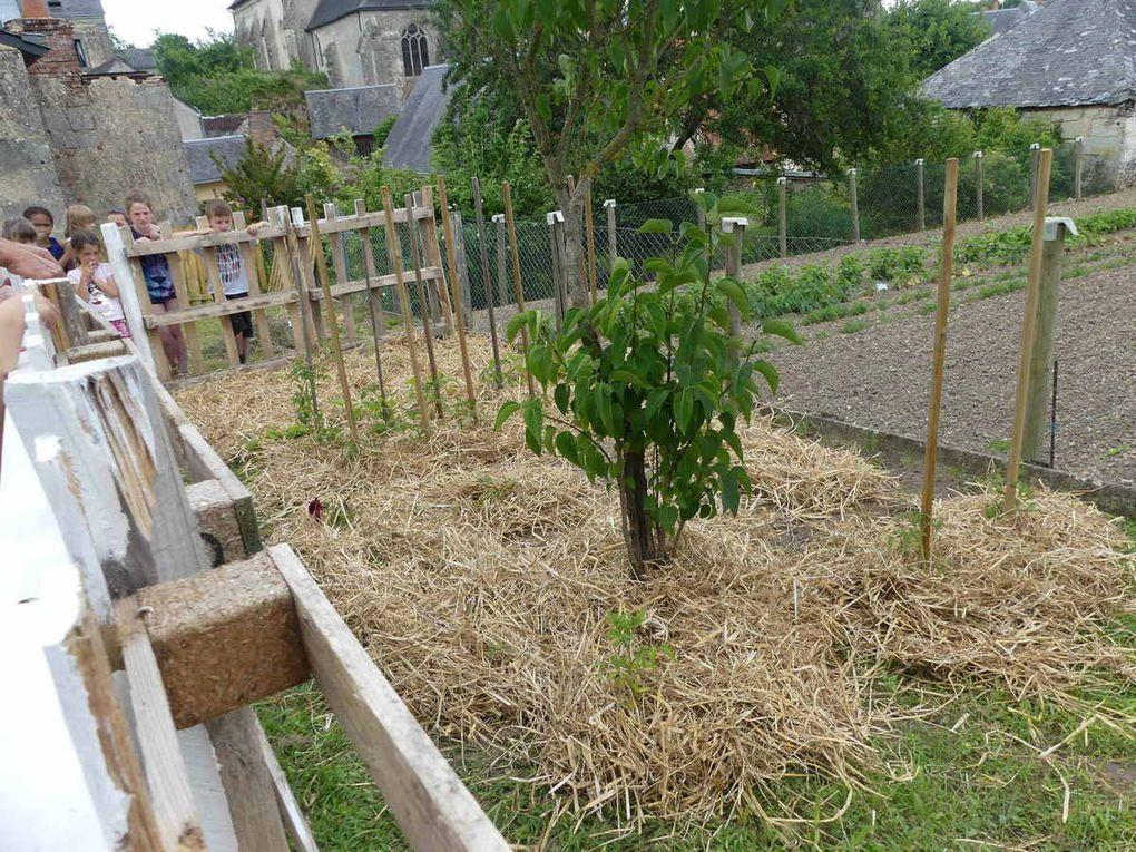 Un aperçu du jardin potager