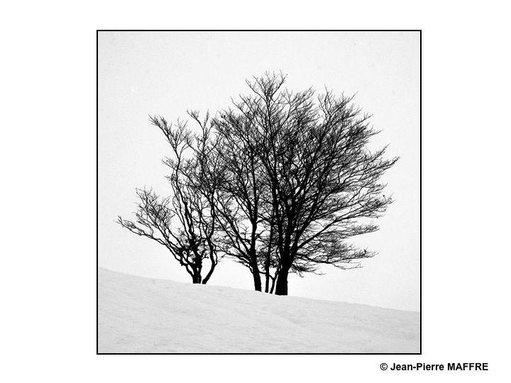 Les troncs et les branches dépouillés de leurs feuilles présentent des formes d'une simplicité épurée.