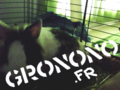 Le blog de Gronono