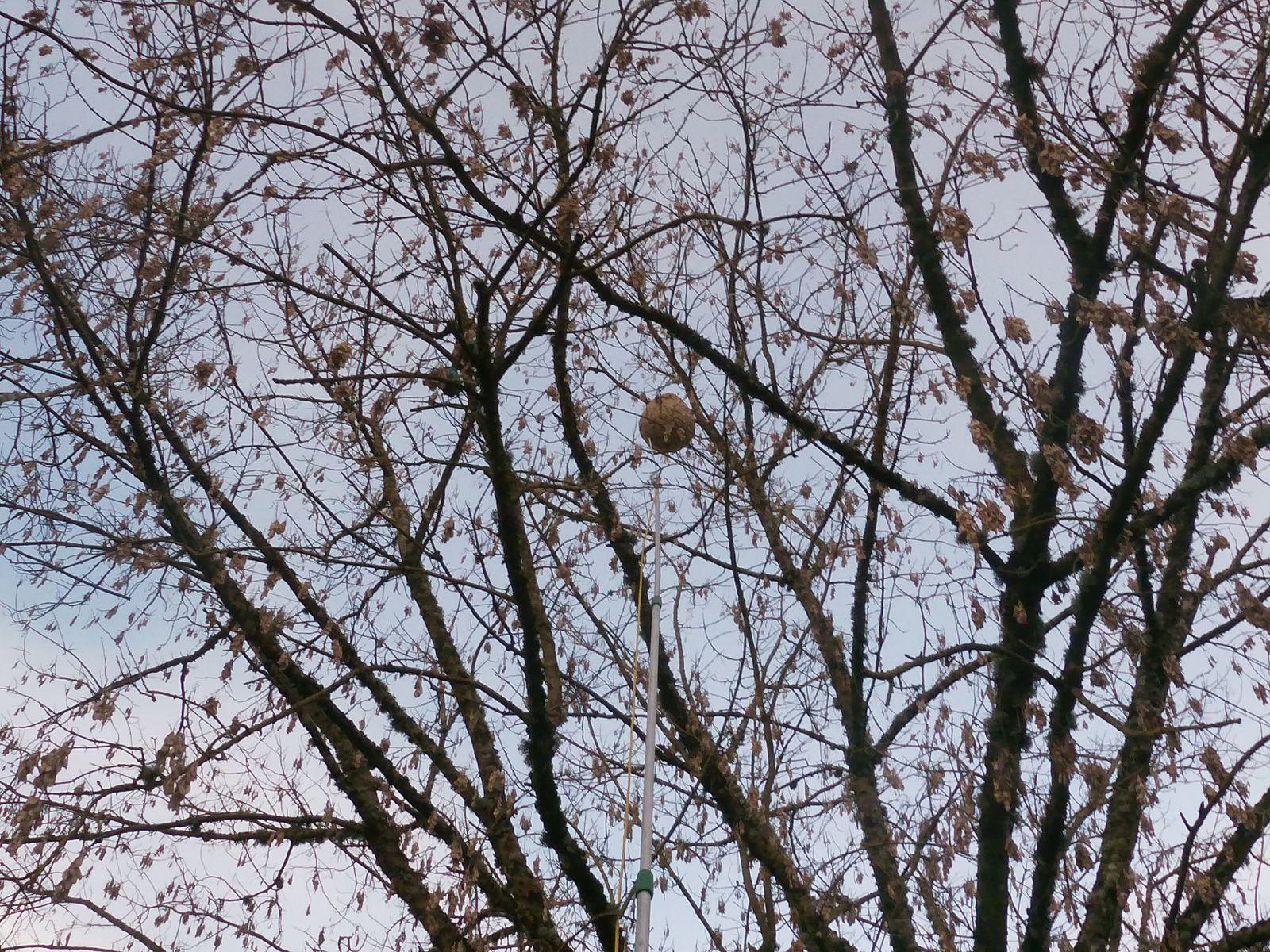Léognan destruction traitement rapide de vos nids de frelons par ADSA33 06 78 18 32 34