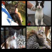 """""""Piumi e mori e altre storie feline"""" antologia dedicata ai gatti a sostegno delle attività del Gattile di Osimo (AN)"""