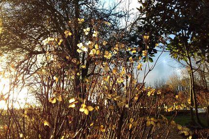 Magie de l'hiver au jardin des Violettes