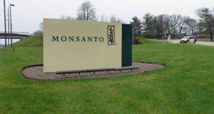 Europe. Monsanto reçoit l'agrément européen pour du soja OGM.