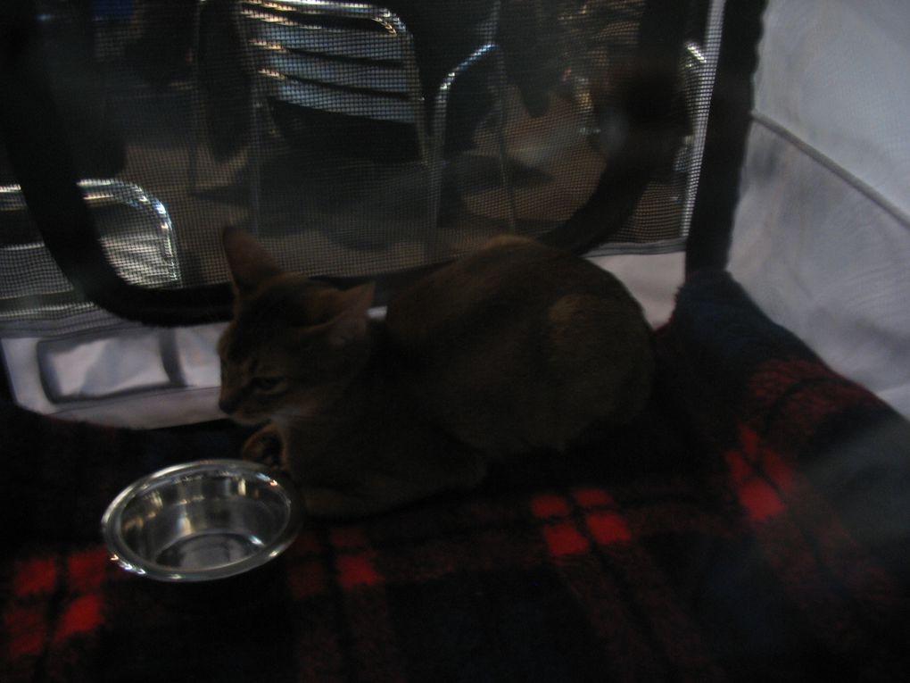 Salon International du Chat à Tours en le 5,6 Février 2011