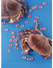 Coquetiers au crabe (Maxi magazine)