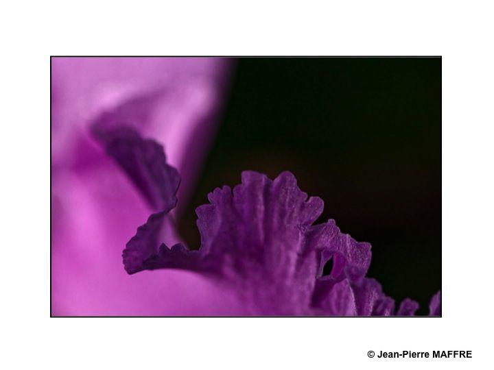 Des orchidées comme des bijoux : émeraudes, améthystes, rubis et topaze.