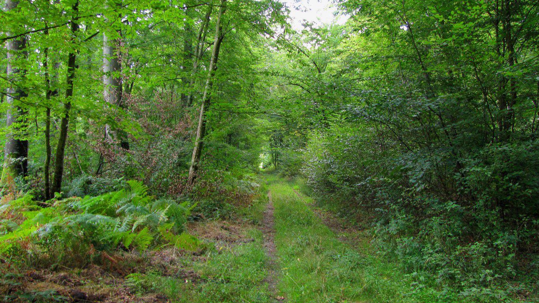 carrefour_Route du Parquet de Bois_Route des Mares Saint-Louis