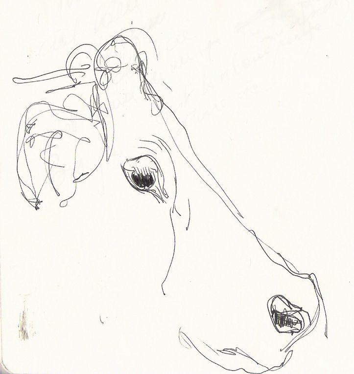Aquarelles de Bruno Allain