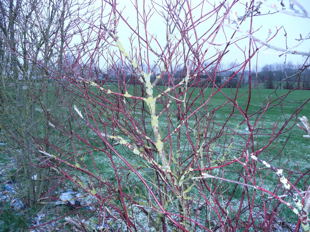 Quelques photos aux couleurs de l'hiver...