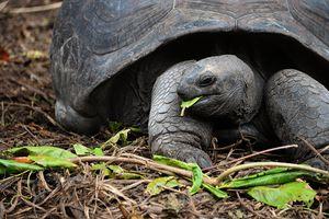 Résistantes aux catastrophes naturelles, les tortues ne survivent pas… à l'Homme