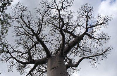 Des arbres uniques au monde