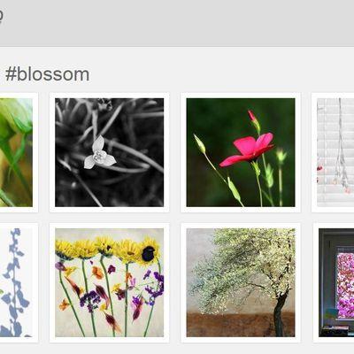 Mon défi photo : #blossom