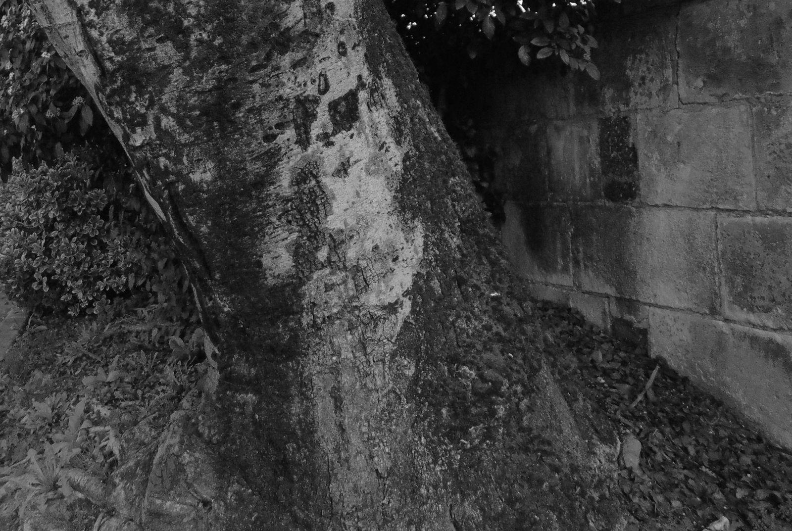 """De la place Bassompierre au pont Bernard Palissy semblant plonger dans la Charente, ou le contraire. Puis de la rue Alsace Lorraine, où des riverains en ont assez de voir cette brave plaque d'égout servir de poubelle ou de cendrier, au carrefour Pasteur devant ce vénérable arbre qui semble défier les.... siècles. Et enfin """" Michel """" et """" Maitre Bernard Palissy """""""