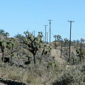 Yucca Valley - Wikipédia