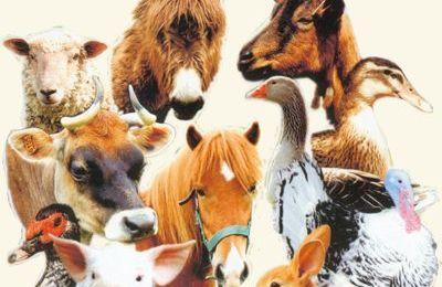 Avez-vous pensé à l'Aloe Vera pour vos animaux ?