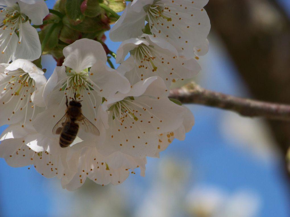 Album - pollinisateurs