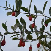 fleurs et fruits sauvages d'automne sur les falaises de Boulogne sur mer - crea.vlgomez. Victoria Lynn , photographe et bricoleuse touche à tout.over-blog.com
