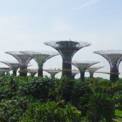 Gardens by the Bay, Singapour.