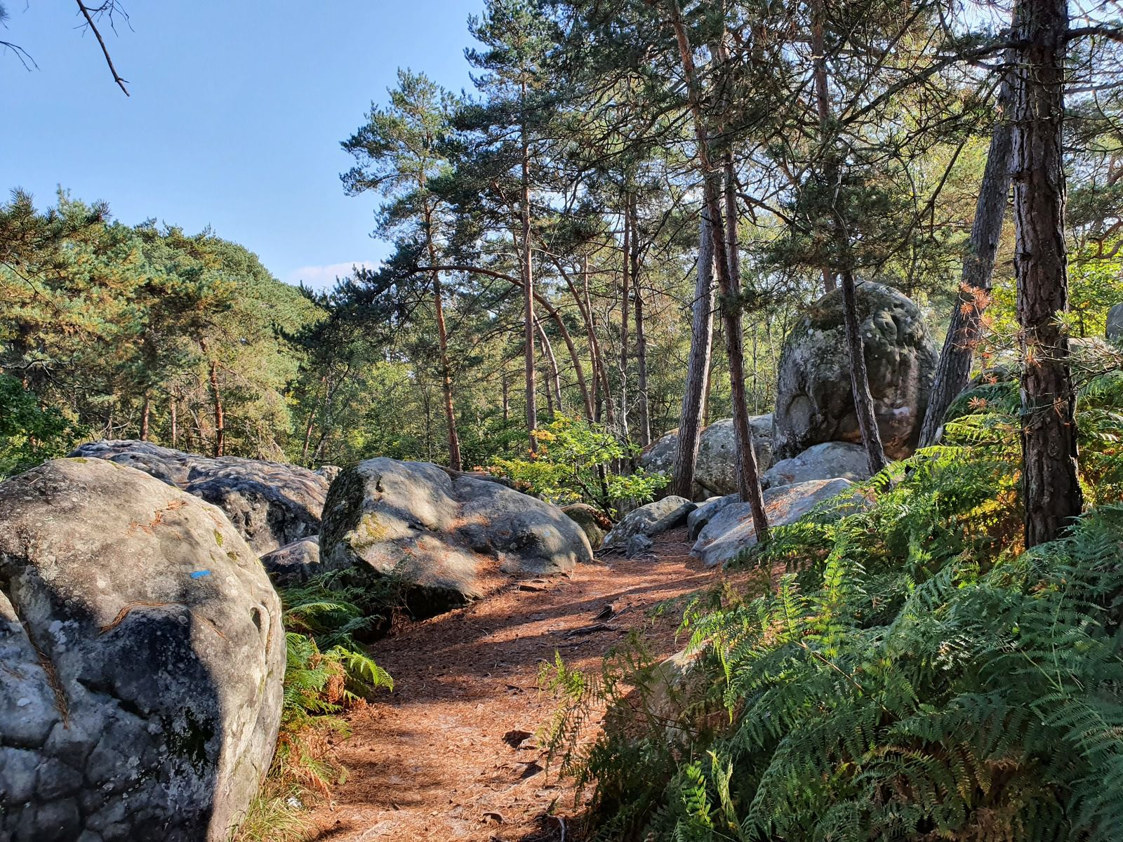 Zone du Rocher Canon, Forêt de Fontainebleau
