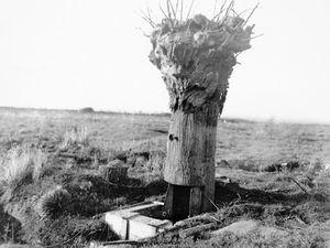 Brise lames à Saint-Malo, fausse trogne en 1917 à Messines (Belgique)