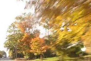 video route du maine