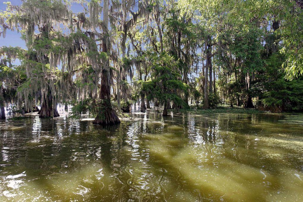 Diaporama : alentours du Lac Martin, Louisiane