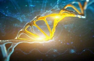 L'histoire de l'ADN et de la race humaine