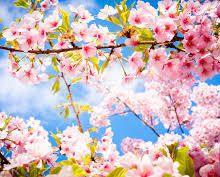 La loi du printemps