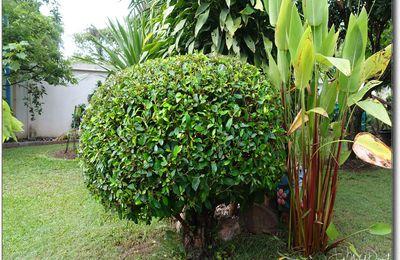 Vendredi entretien du jardin (Thaïlande)