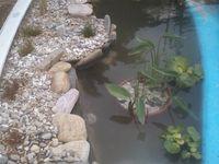 installation d'une berge afin de casser les anlges surtout pour mettre des plantes de berges,indispensable pour une bonne phytoepuration