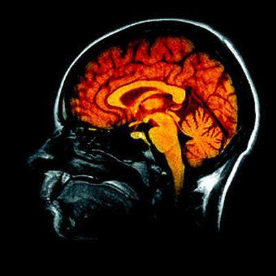 الذكاء الانفعالي: مفهوم ثوري في علم النفس الحديث - 2