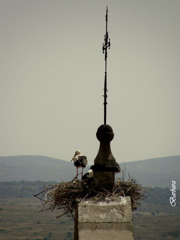La garadi pittura per le strade dell'antica città e le cicogne con i loro nidi sui campanili ...
