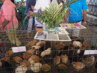 Foire agricole de Vaitupa