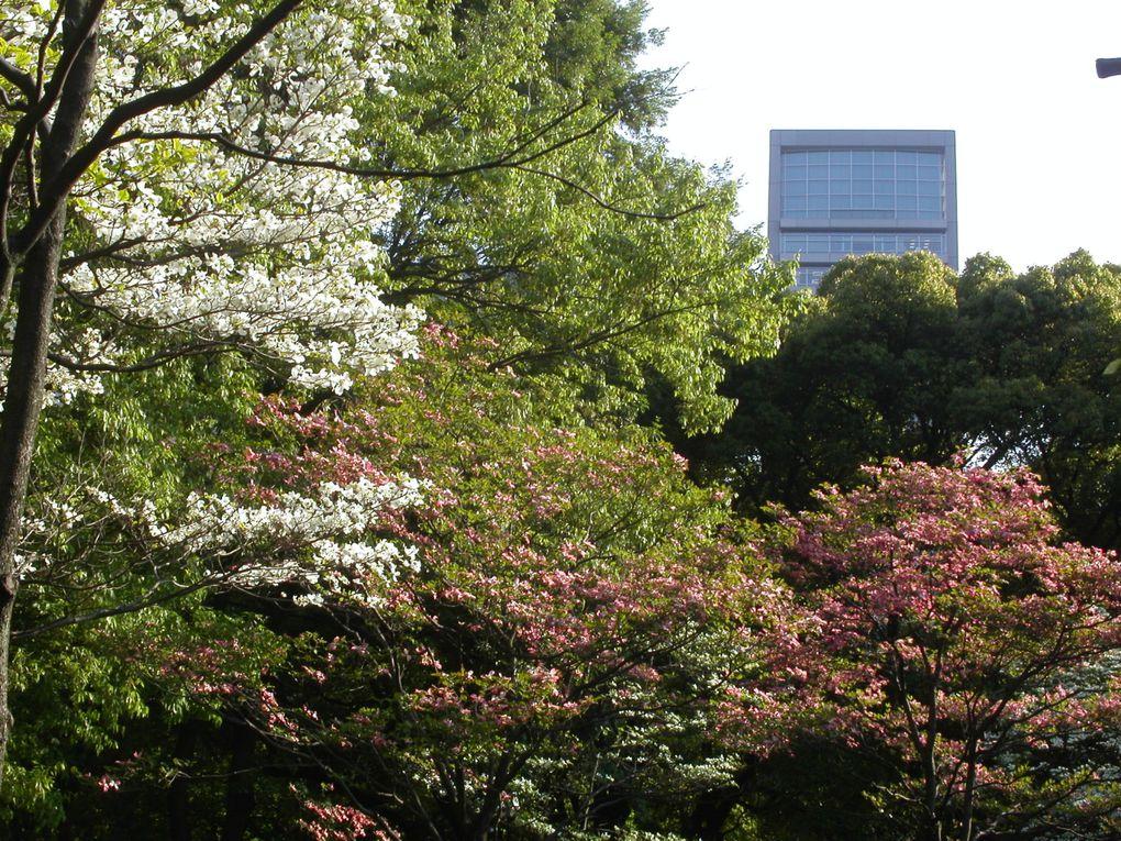 Quelques vues du Japon