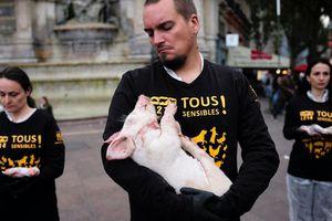 A Paris, L214 met en scène la souffrance animale