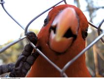 La perruche qui rêvait de liberté