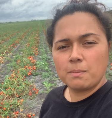 #FRANCE : Appel à la solidarité: des milliers de tonnes de tomates risquent d'être broyées près de Bordeaux. Cueillette gratuite