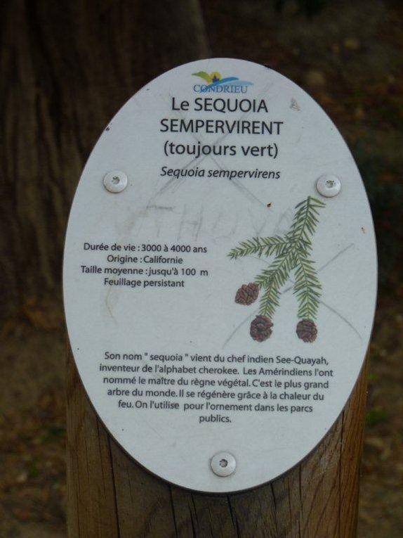 """""""Séquoia"""" de Condrieu"""