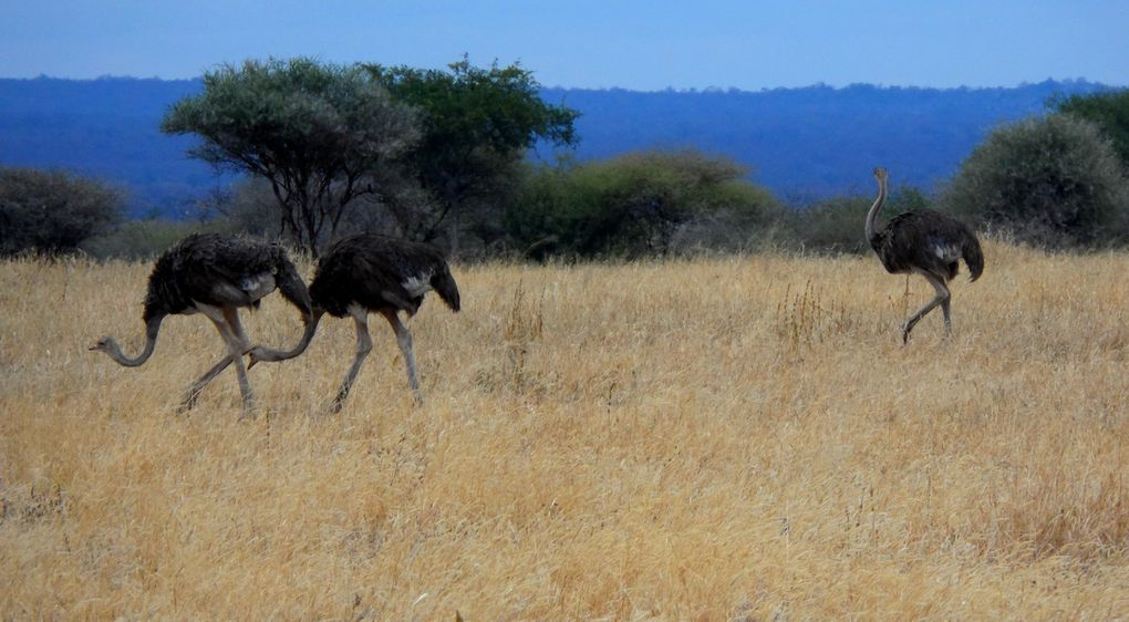 Le safari : Babar, Simba & tous les autres