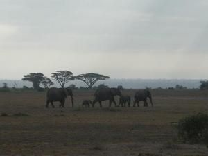 Album - Kenya