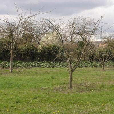 Calendrier d'automne 2020 des activités d'Asparagus